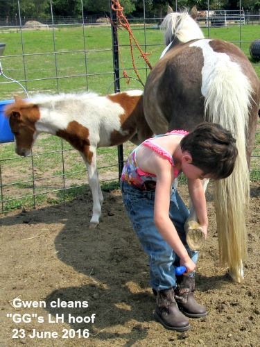 gwen cleans gg's hoof