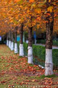 Chinaar path, CIIT, Abbottabad