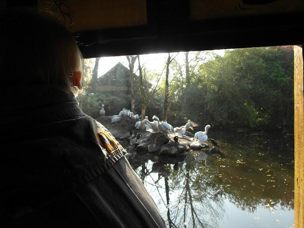 Eon ziet watervogels