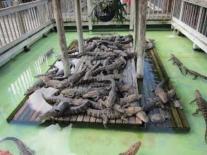 Photo: Gators!
