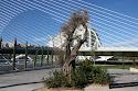 Foto del Puente Assut de L'Or