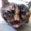 Danimalia Cerevisiae's profile photo