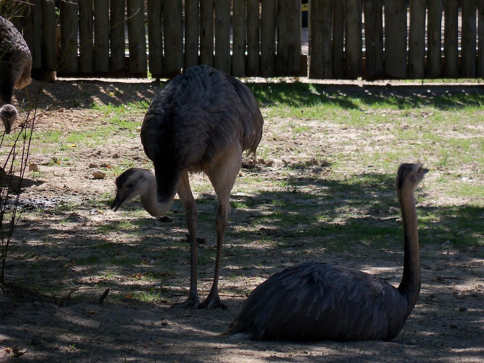 Houston Zoo - 116_8435.JPG