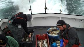 cutting cod.jpg