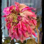 20121125-01-aster-november.jpg