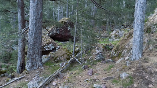 La montée dans la zone forestière