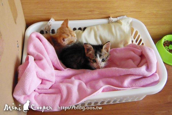 2cats ★ 加入家族的第二天 Mini & Cooper