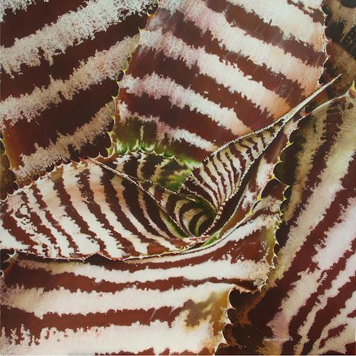 Urszula Dudek, oil, 'Cryptanthus'