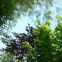 2011 05 21 Greenfinger Grosbous 008