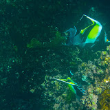 galapagos - Galapagos_FB_2-47.jpg