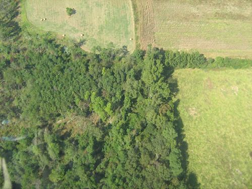 Aerial Shots Of Anderson Creek Hunting Preserve - tnIMG_0377.jpg