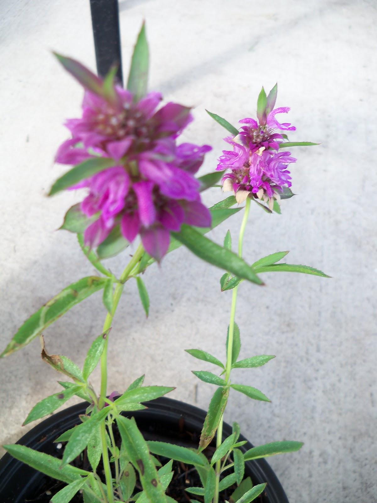 Gardening 2010, Part Three - 101_4956.JPG