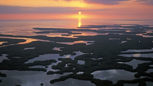 Ten-Thousand Islands, Mangroves, Everglades National Park, Florida.jpg