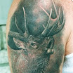 Elk #3