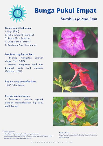 manfaat-bunga-pukul-empat-bagi-kecantikan
