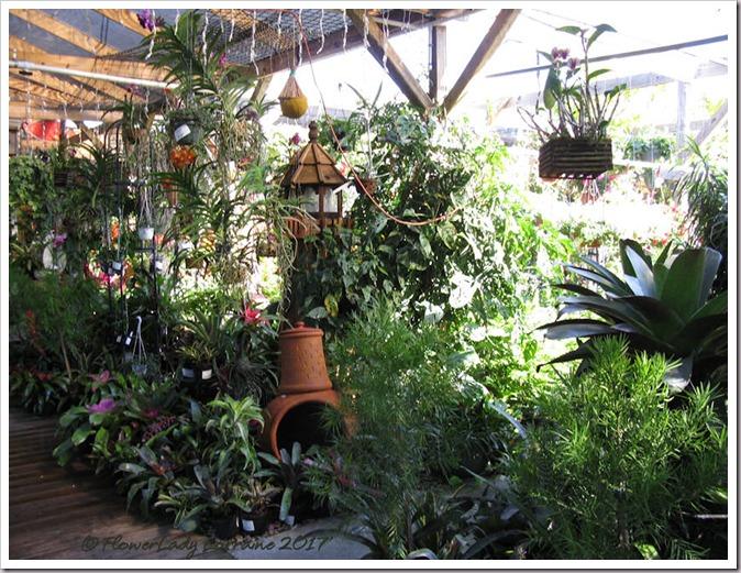 05-08-plants