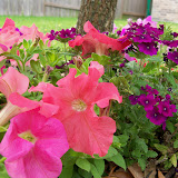 Gardening 2011 - 100_7199.JPG