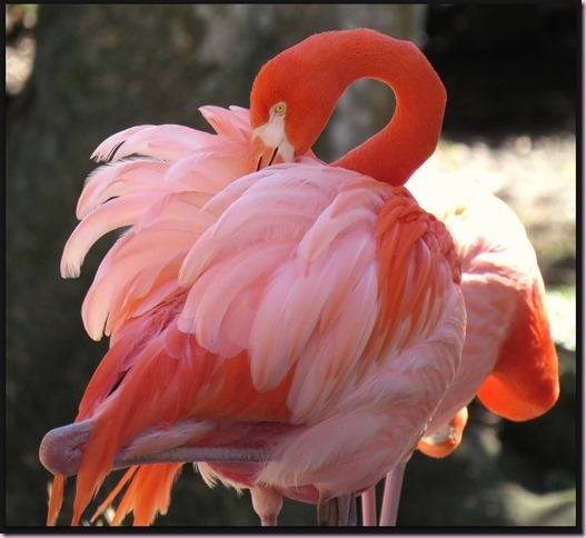 flamingoIMG_7566