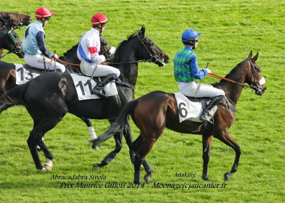 Photos Auteuil 2-11-2014 (48h de l'obstacle) IMG_5446