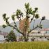 Haystacks of Rishikesh