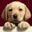 Perros de La Plata's profile photo