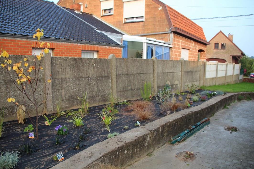Nouvelle maison dit aussi nouveau jardin... IMG_9525