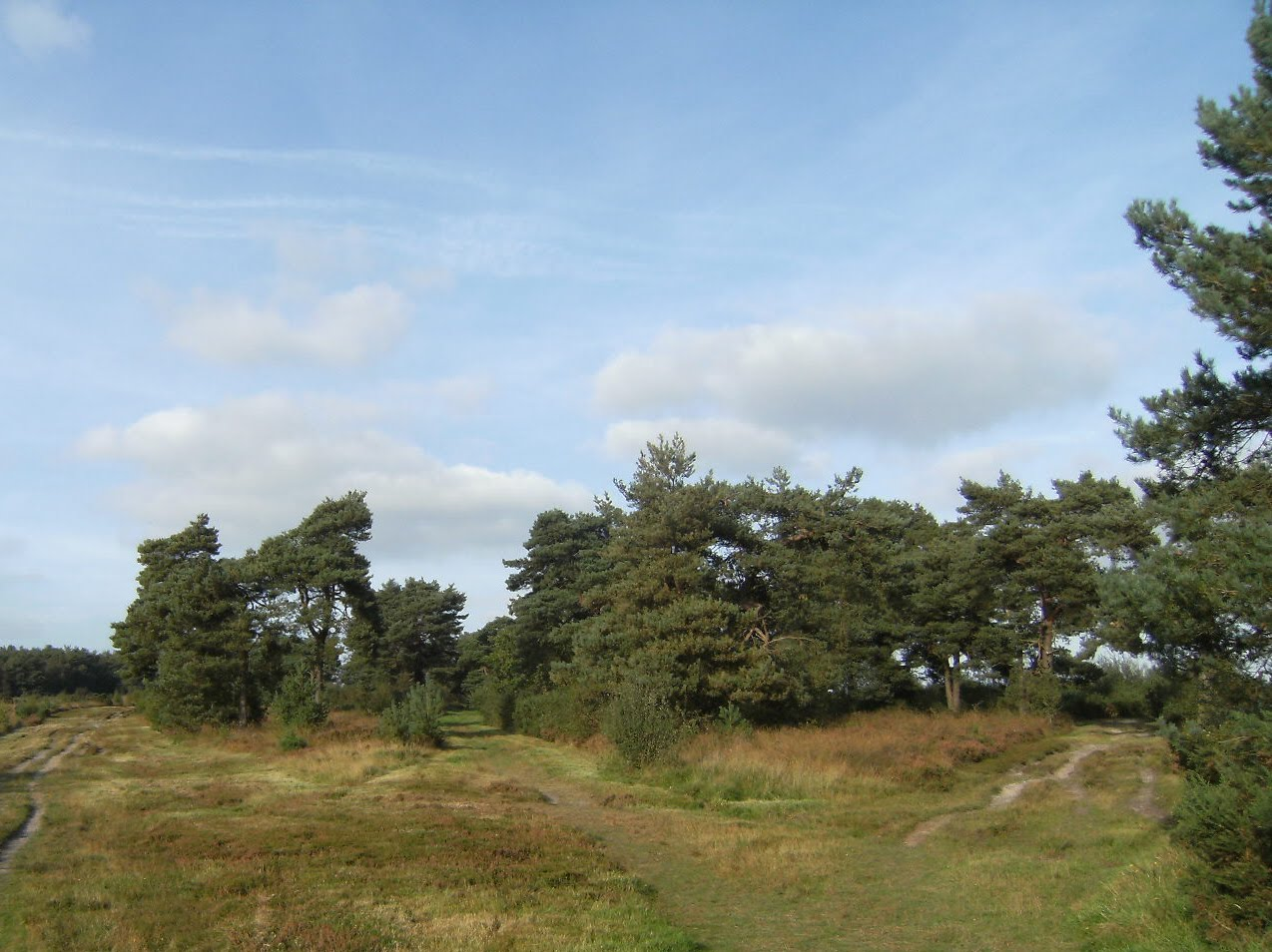 DSCF9717 Through Ashdown Forest