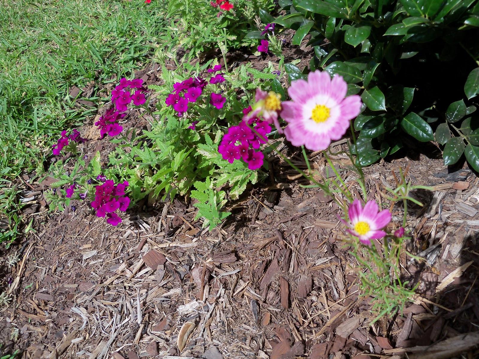 Gardening 2010, Part Three - 101_3920.JPG