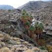palm-canyon-68.jpg