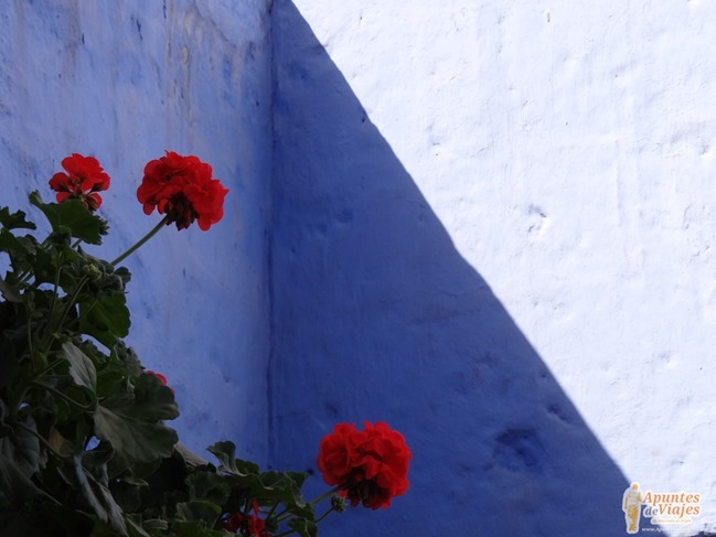 Convento Santa Catalina Arequipa 13