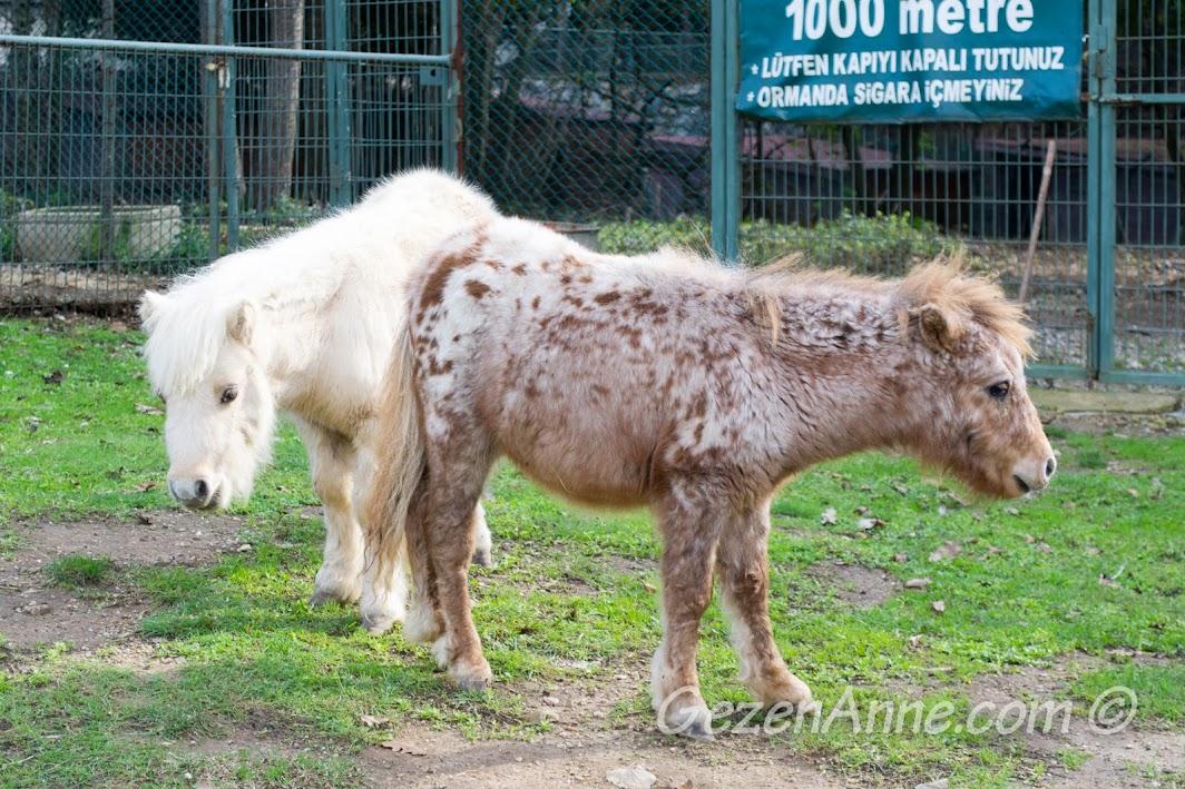 Piknik Park'taki minik atlar