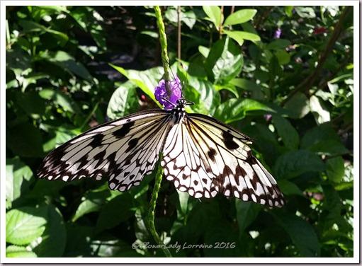 10-22-butterfly7