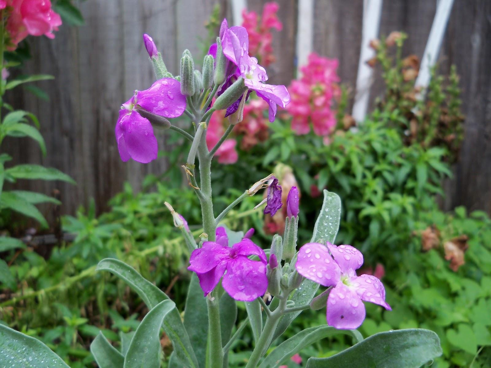 Gardening 2012 - 115_1370.JPG