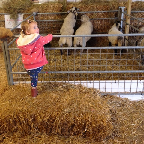visit a farm - things to do in the summer holidays
