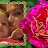 SUSAN DONAHUE avatar image