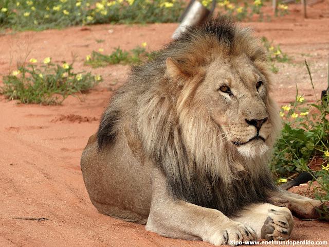 leon-erindi-namibia.JPG
