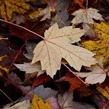 maples_MG_2283-copy.jpg