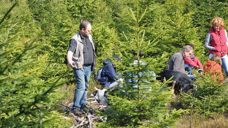 2014-04-13 - Waldführung am kleinen Waldstein (von Uwe Look) - DSC_0441.JPG