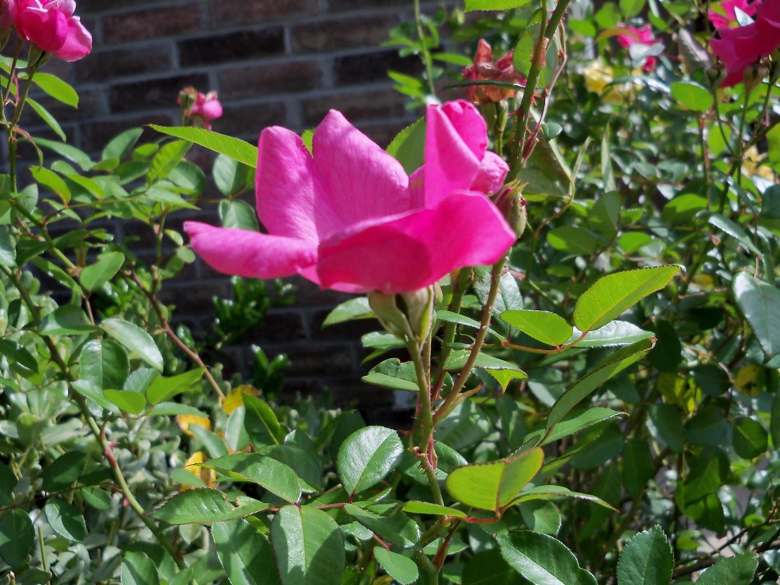 Gardening 2012 - 115_1703.JPG