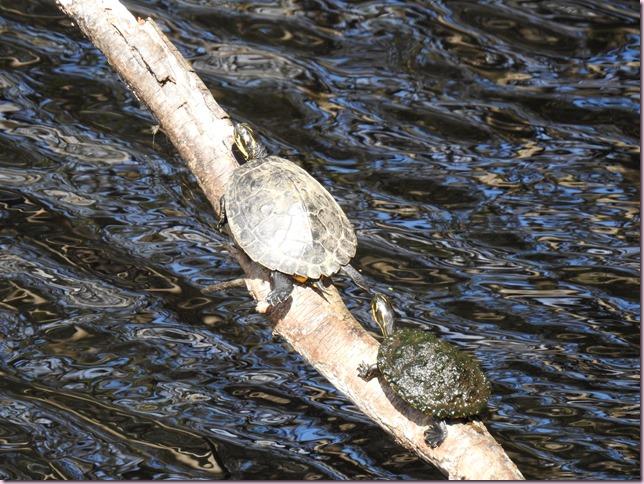 tortoiseDSCN2306