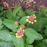 Gardening 2015 - 116_9258.JPG