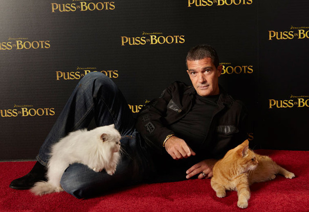 Antonio Banderas and two cats
