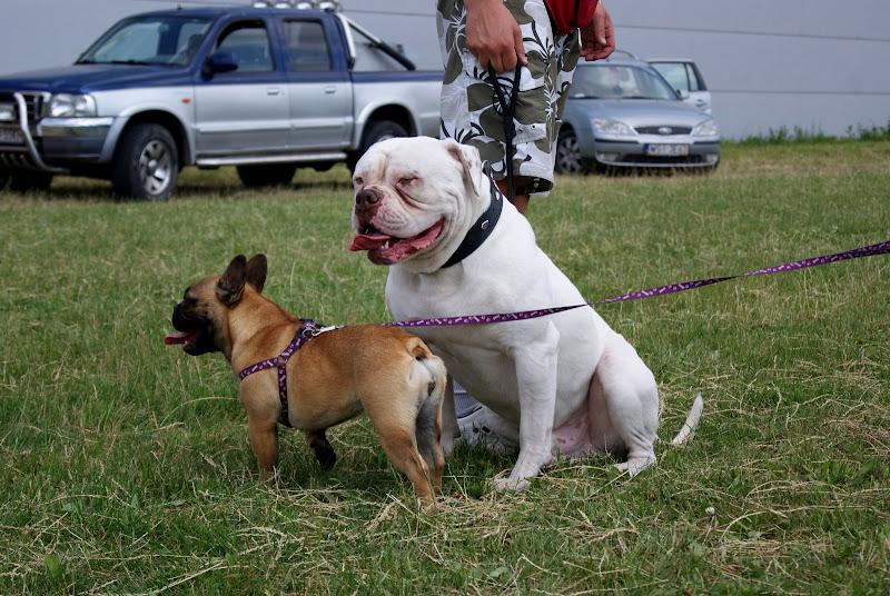 Wystawa psów - dsc00395.jpg
