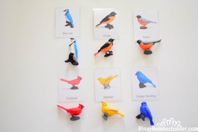 birdthemetotschool-2734