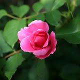 Gardening 2012 - IMG_2781.JPG
