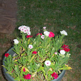 Gardening 2014 - 116_1144.JPG