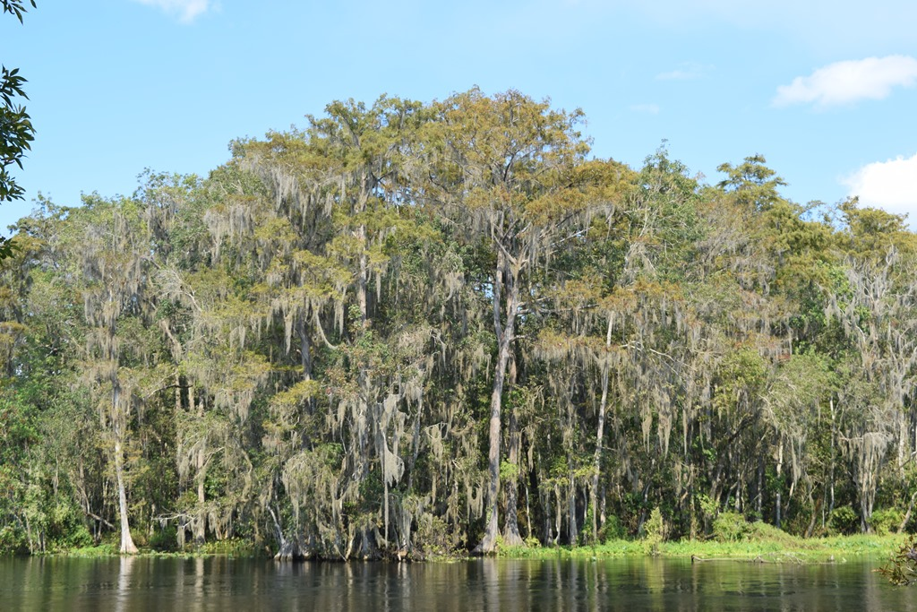 [Cypress+on+the+River%5B3%5D]