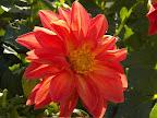 Fall Flower - Janet Mlinar