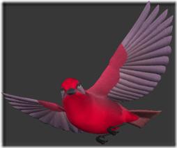 palomas (2)