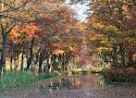 03 herfst in de peel.jpg